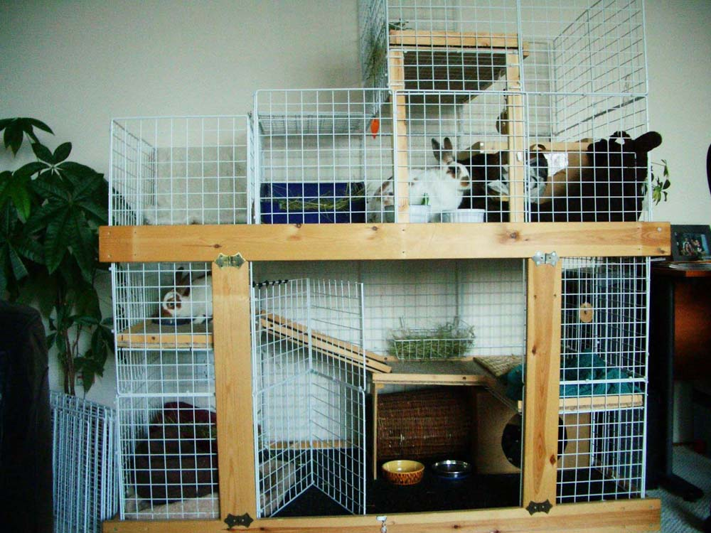 Rabbit cage plans. How to build your own homemade all-wire rabbit cage